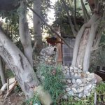 Kanatlı Bahçem
