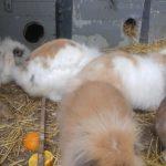 kanatlı bahçem tavşan