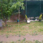 tavus kuşları kanatlı bahçem